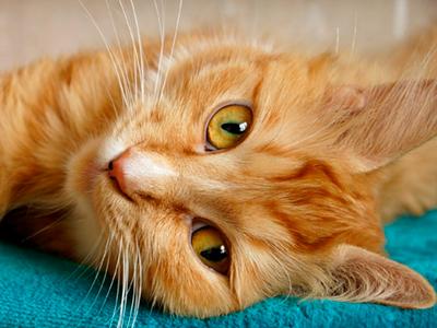 Снимки на котки