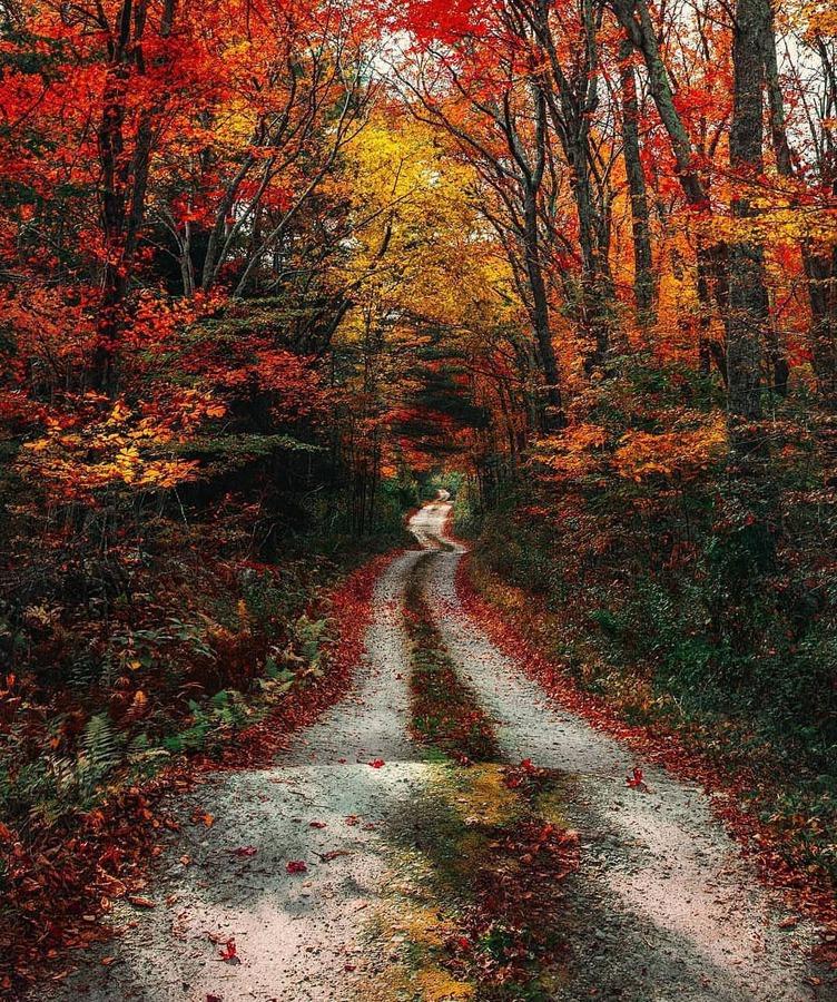 есен в гората, път