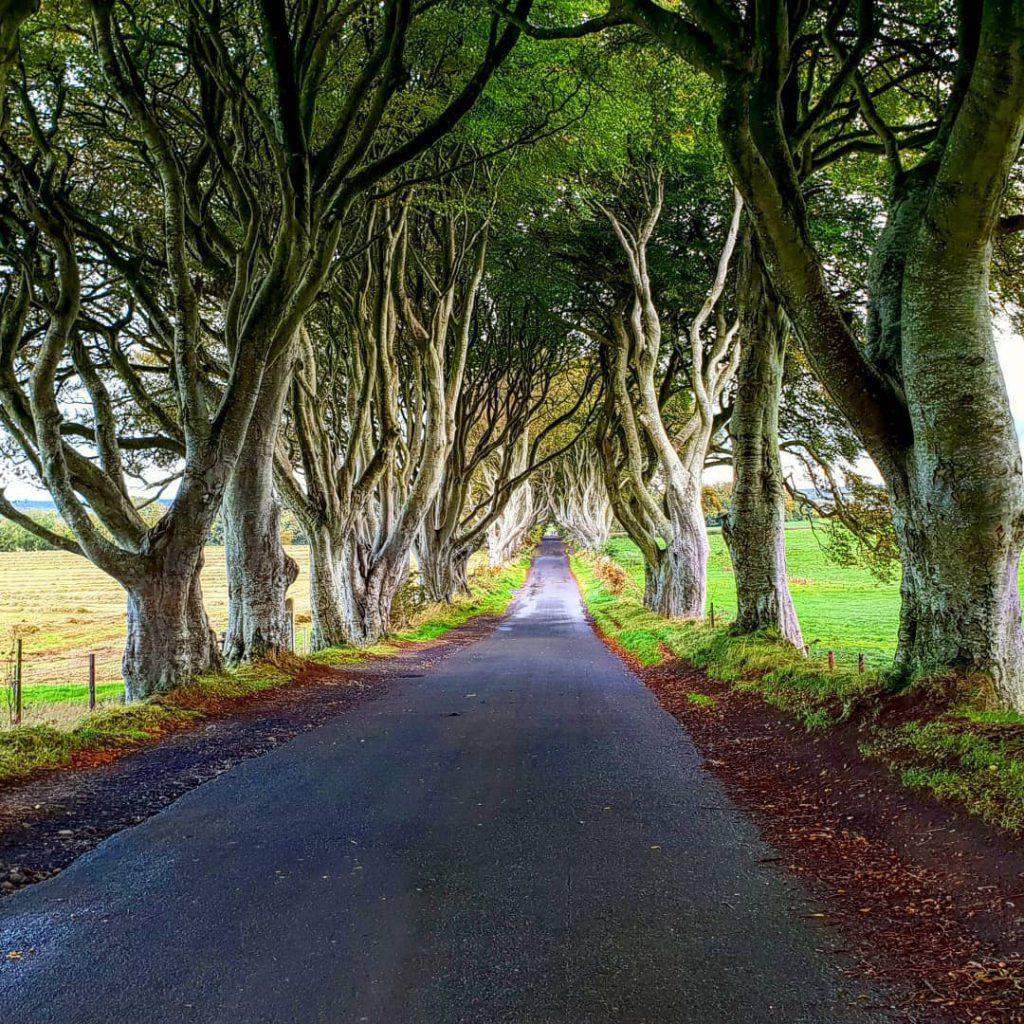 Път сред дърветата