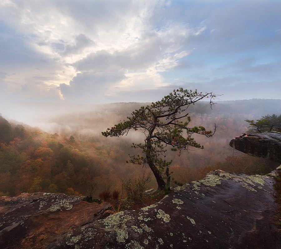 Дърво на върха