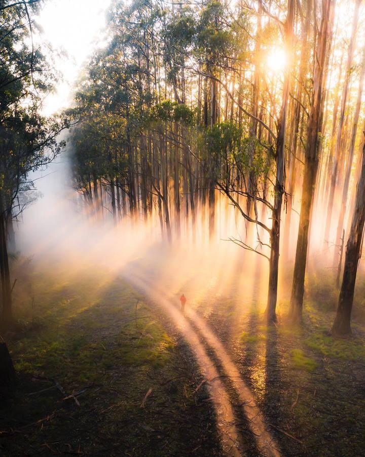 Слънчеви лъчи сред дърветата