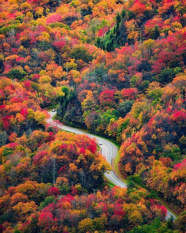 Есен и река в гората
