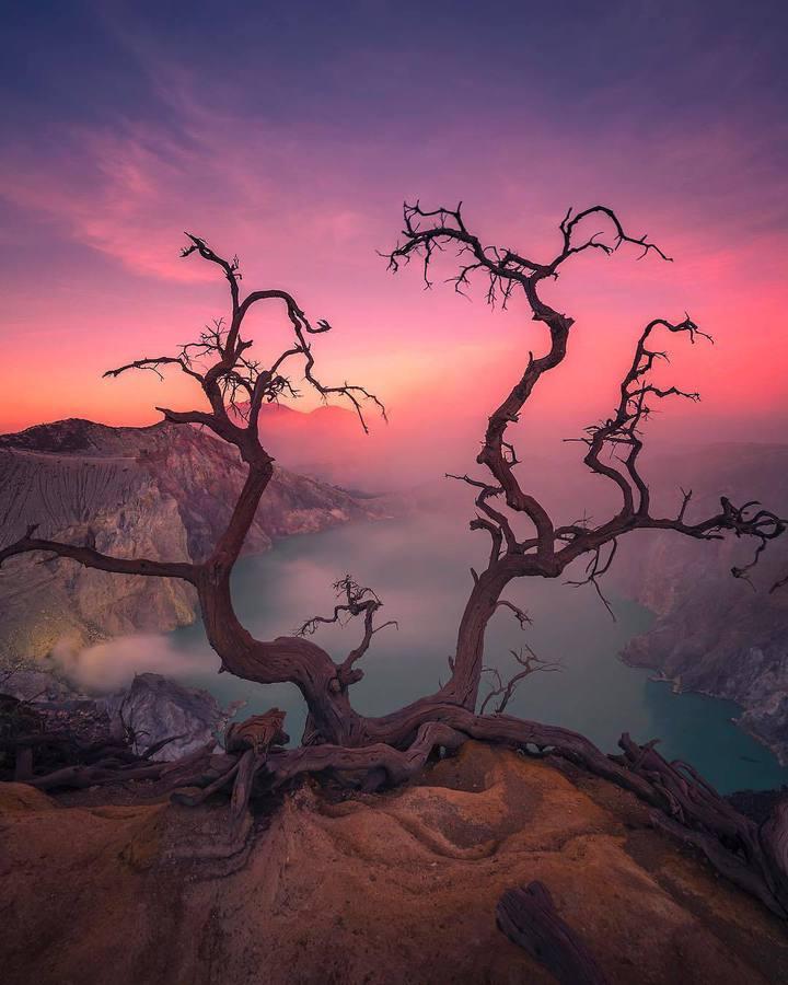 Самотно дърво на върха