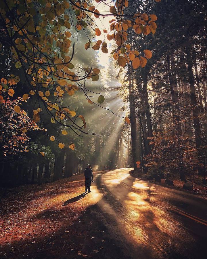 Слънчеви лъчи в гората