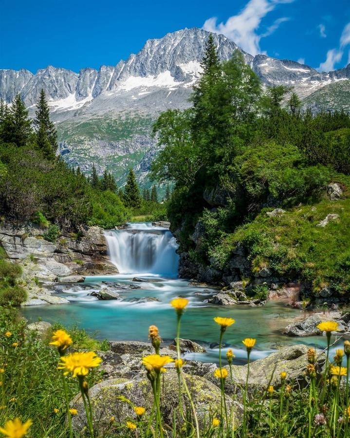Цветя и река в гората