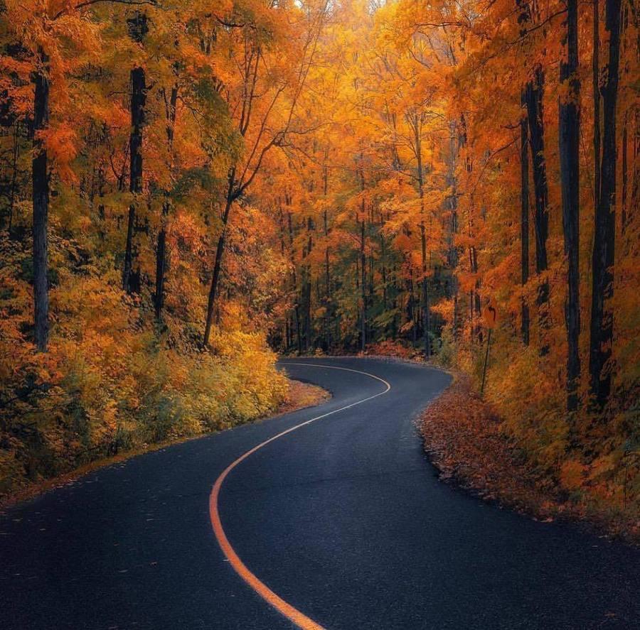 Път сред гората