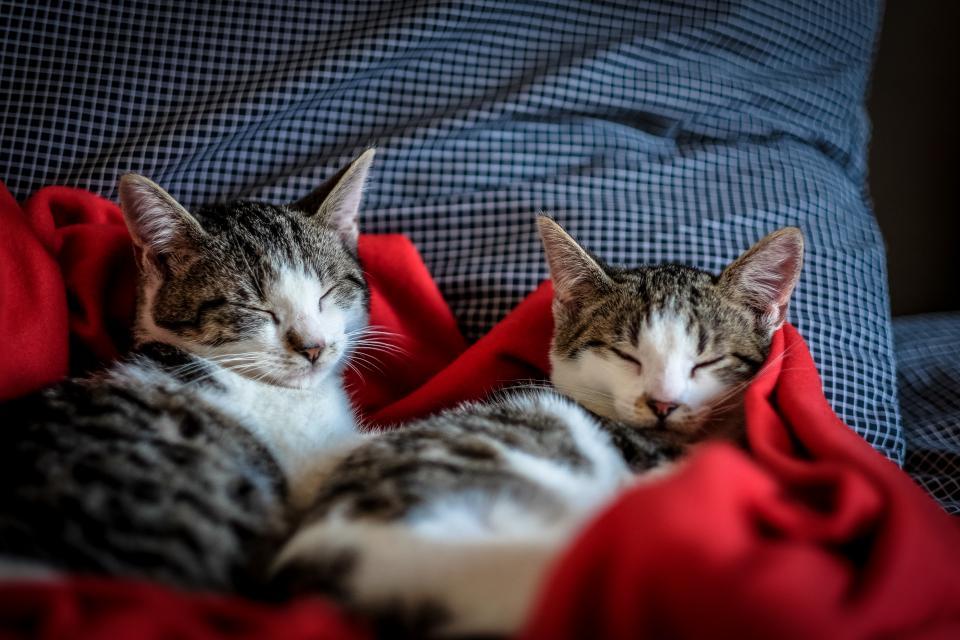 Спящи котки