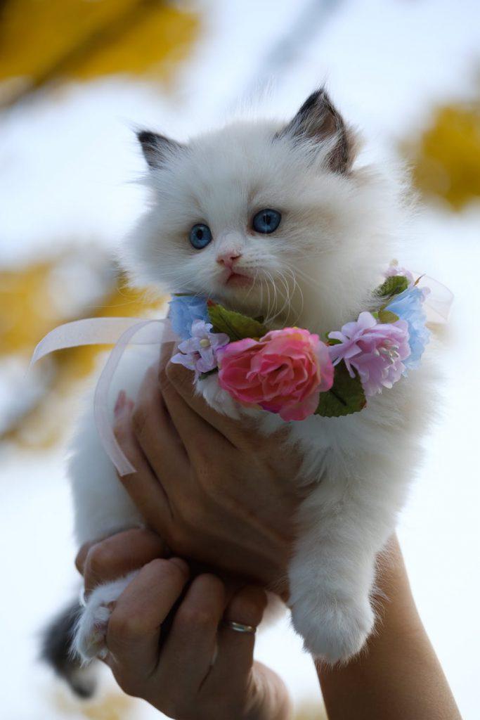Котка и цветя