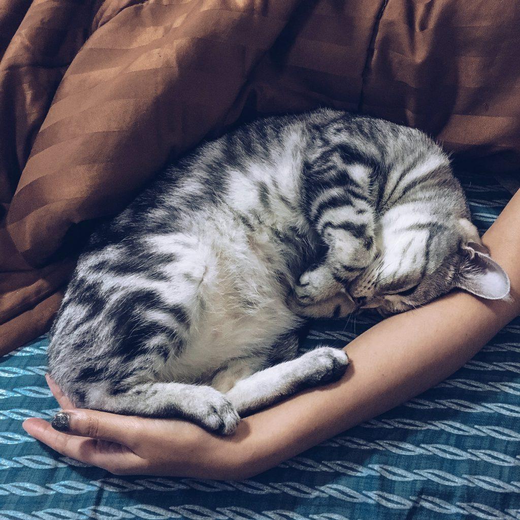 Спяща в човек котка