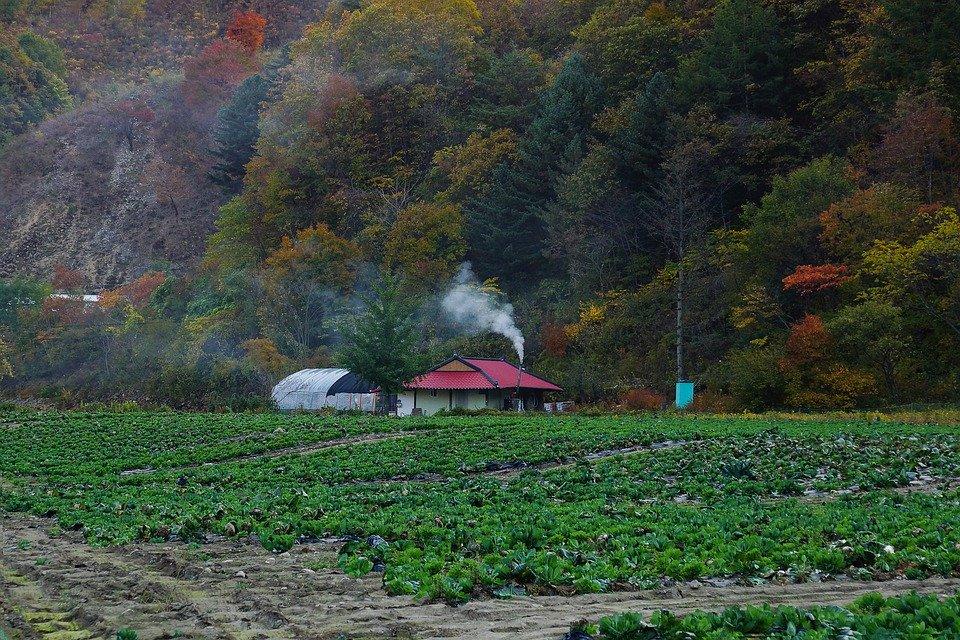 Къща в гората с нива