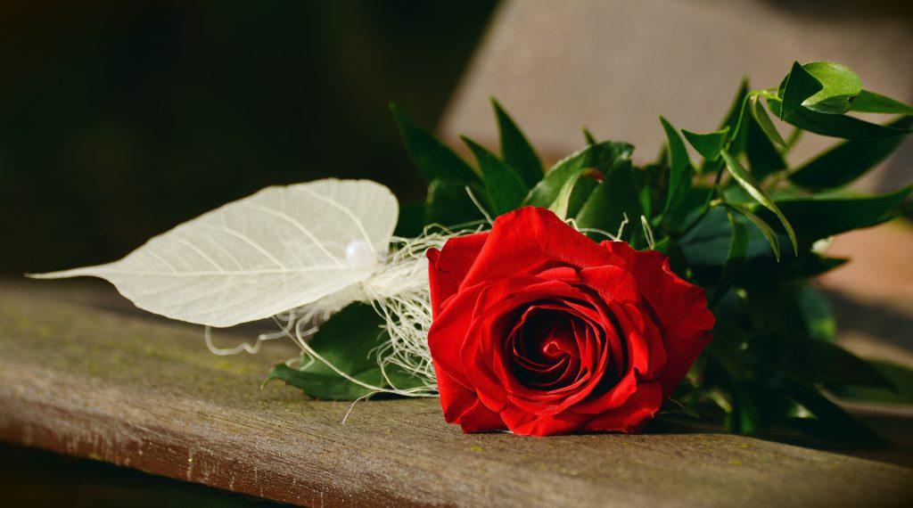 Красива червена роза