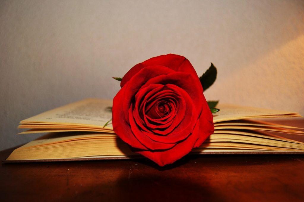Червена роза в книга