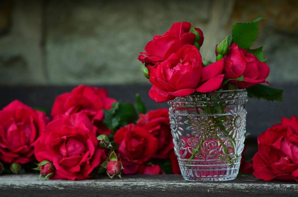Червени красиви рози