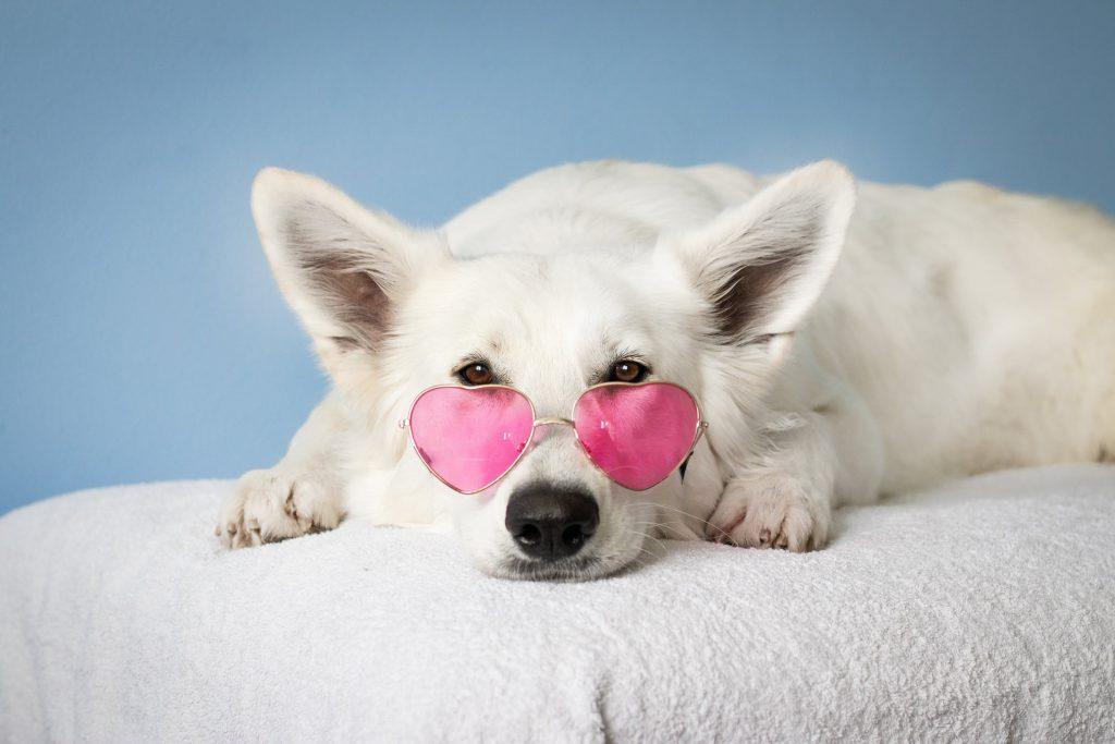 Смешно куче с очила