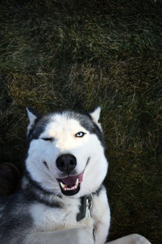 Куче намига и се смее