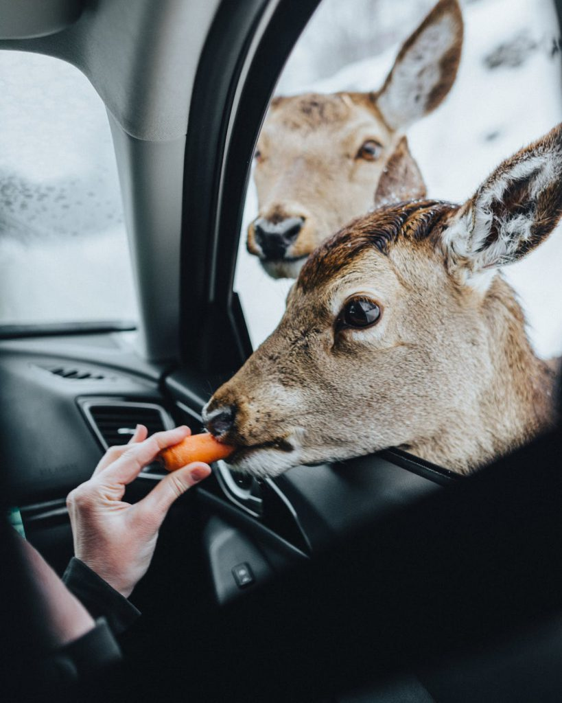 Елен яде морков