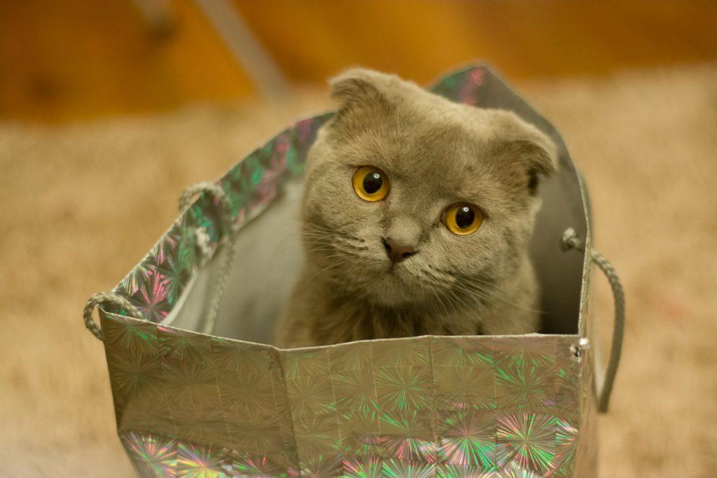 Котка гледа тъжно