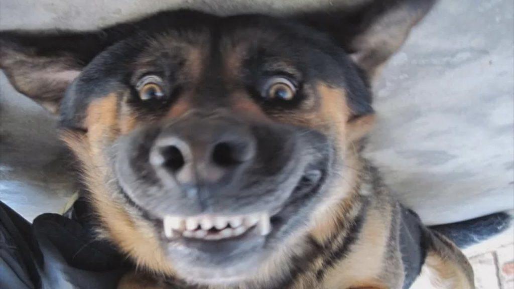Много смешна снимка на охилено куче