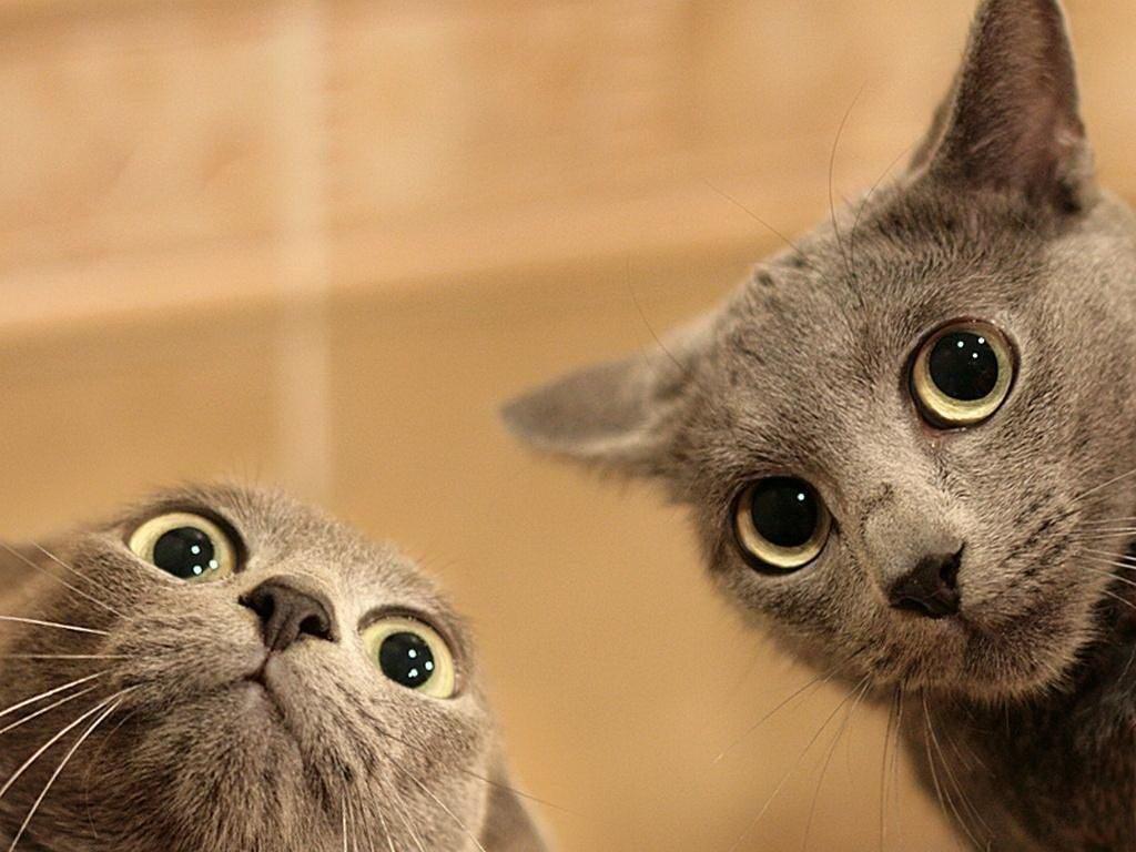 Две котки гледат много смешно