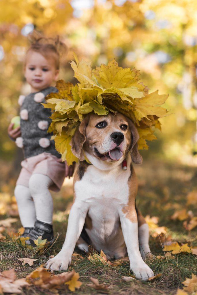 Смешно куче и дете