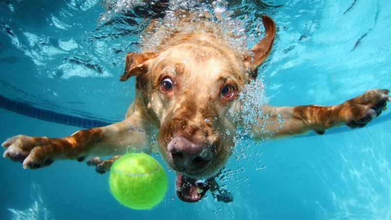 Куче гони топка във вода