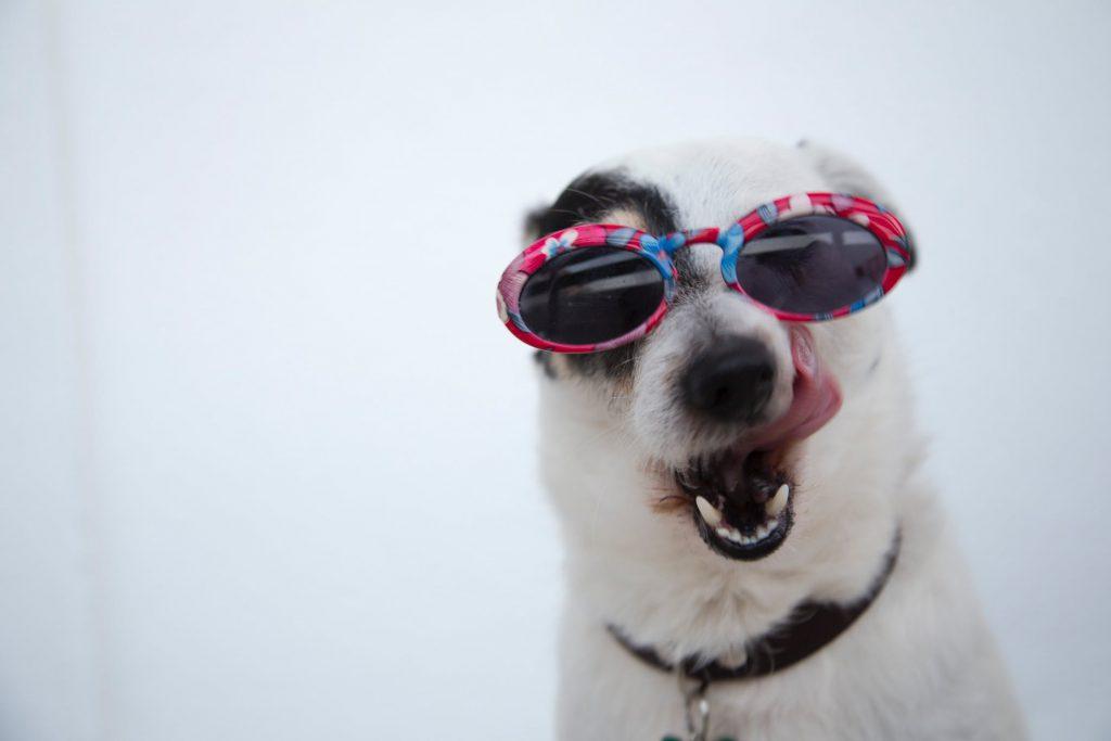 Куче с очила се плези