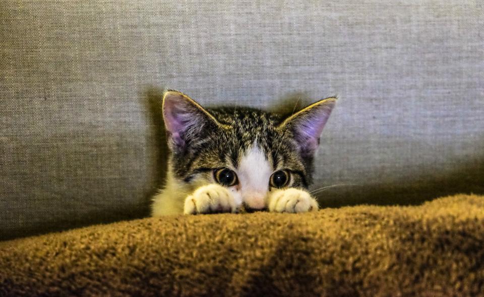 Котка се крие зад дивана