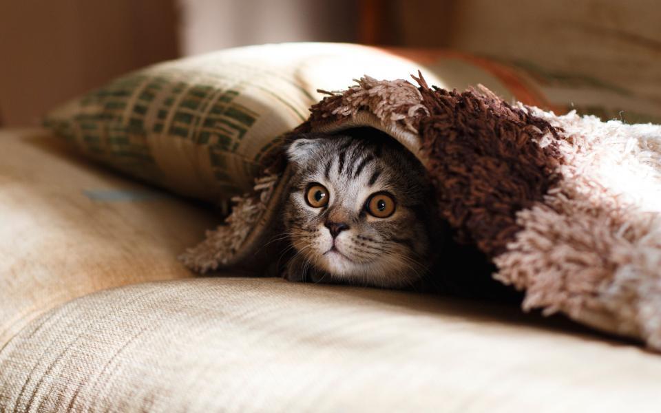 Котка се е показва смешно