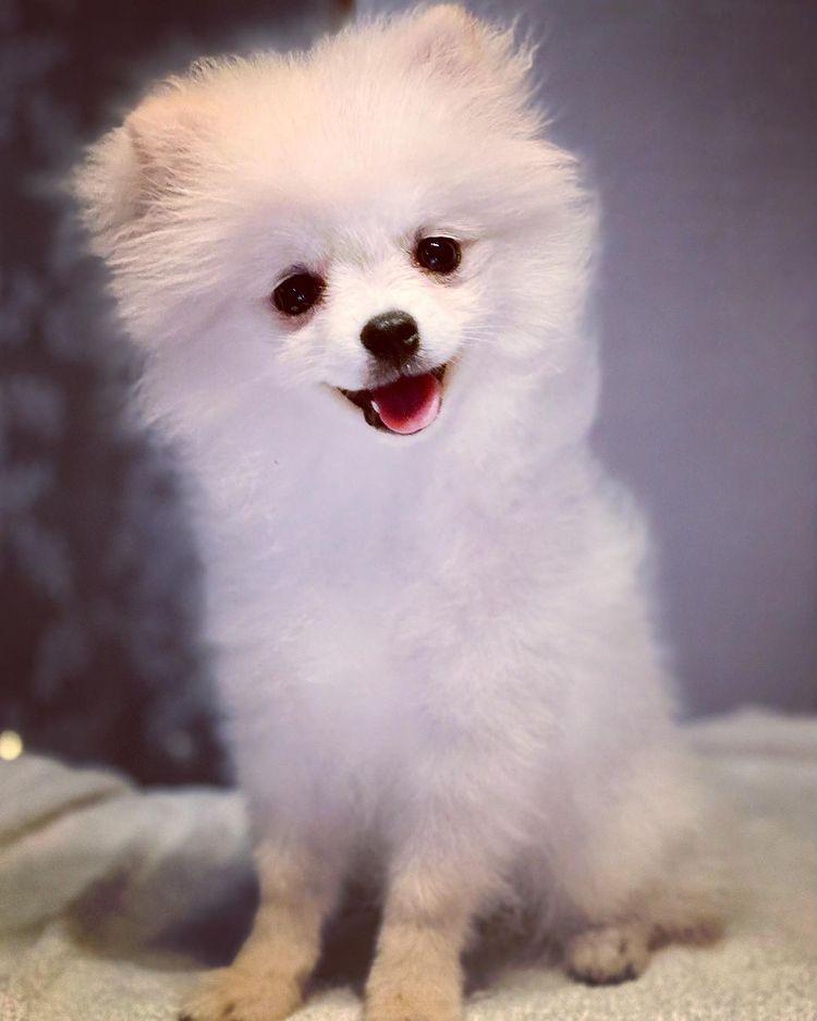 Малко кученце