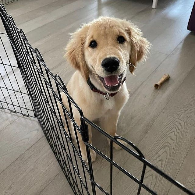 Сладко куче