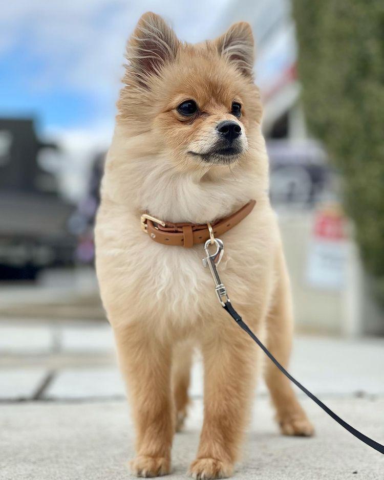 Красиво куче