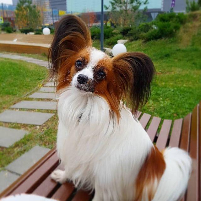 Куче с прическа