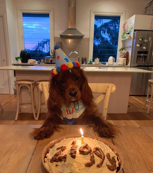 Рожден ден на куче