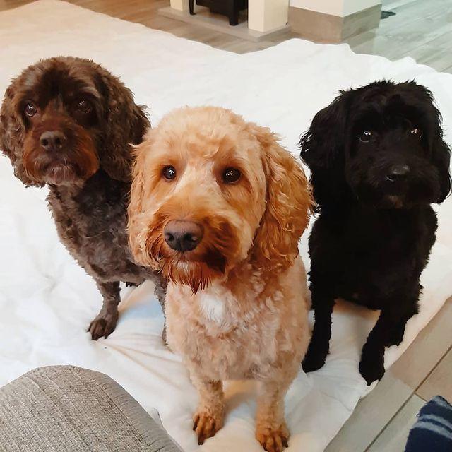 Три кучета