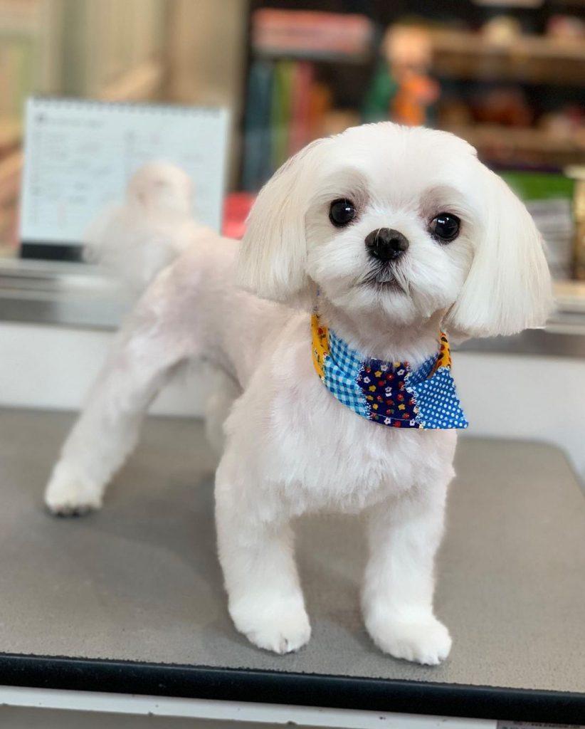 Малко бяло куче
