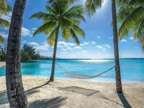 Плаж с палми