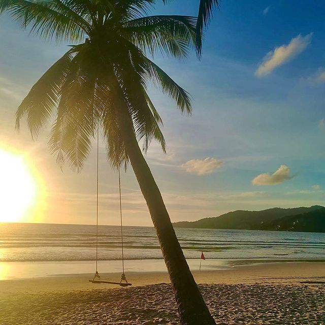 Палма с люлка на плажа