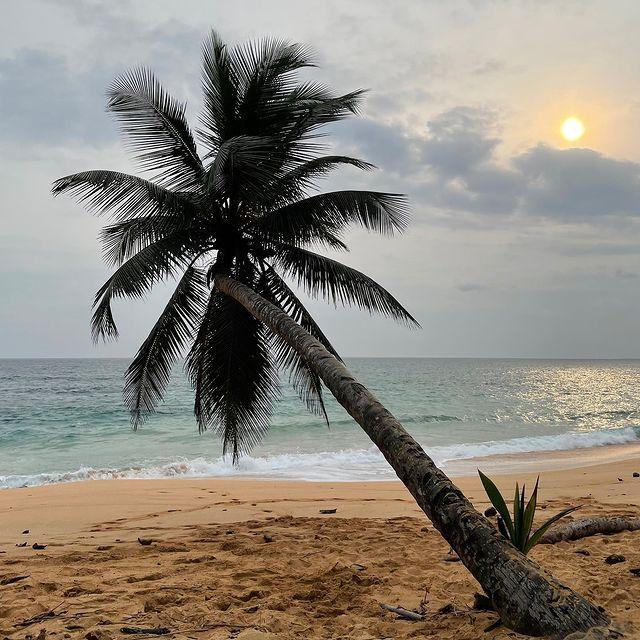 Палма на плажа