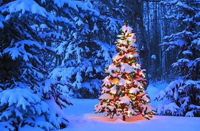 Коледна елха със сняг